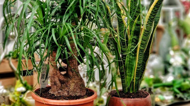 Grünpflanzen – Roozen Blumen und Pflanzen